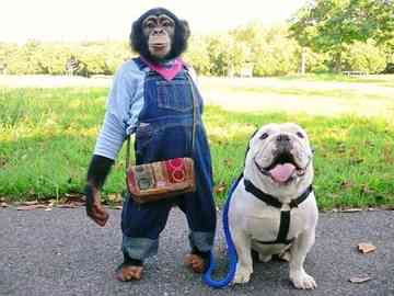 狗狗猩猩大冒險